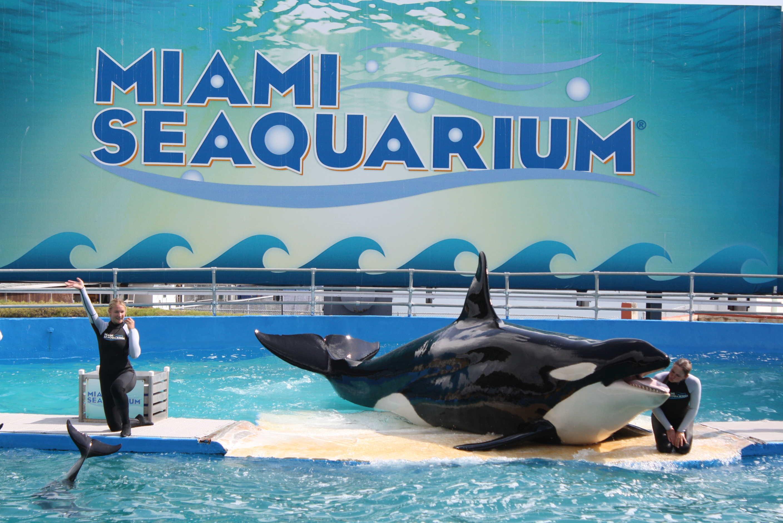 miami seaquarium orque lolita