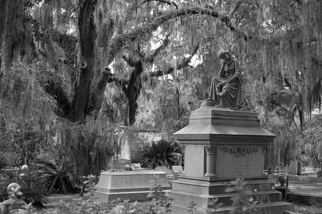 cimetière savannah