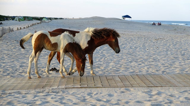assateague island campground
